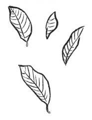 qkstudio-hojas
